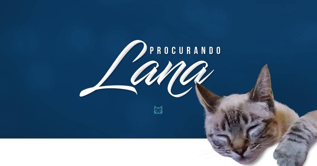 Como usamos um anúncio no Facebook para encontrar uma gata perdida e o Passo-a-Passo para você também explorar esse recurso